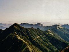 西日本一の雲上の山岳道路沿いのアケボノツツジ咲く高山