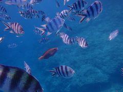 沖縄の海で泳いでみたい☆ほぼ初沖縄3日間