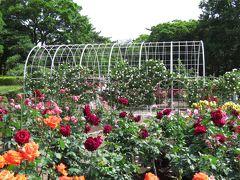 平塚市総合公園のバラ
