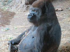 耐える妻の会の首脳と5年ぶりの会合@上野動物園