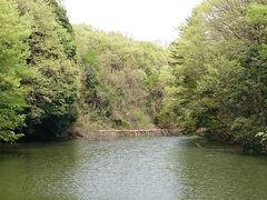 新緑が芽吹きはじめた森林公園