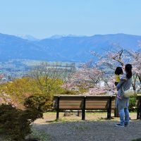 福井県 さくら舞い散る春の越前大野に行ってみた オッサンネコの家族旅