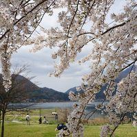 2016.4 満開の桜を訪ねて(3)〜河口湖