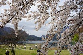 2016.4 満開の桜を訪ねて(3)~河口湖