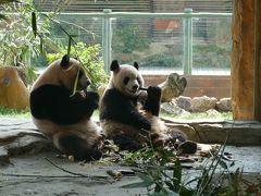 江蘇省常州市淹城野性動物世界のパンダ(艾莉と二巧)