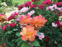 四日市市 南部丘陵公園のバラを見てきました☆