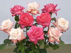 国際バラとガーデニングショウ Vol4 コンテストバラ バラの魅力がいっぱい♪