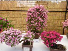 初夏の「神代植物公園」 Vol1 日本伝統のバラ盆栽♪