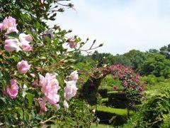 初夏の「神代植物公園」 Vol3 国際バラコンクール花壇・オールドローズ園♪