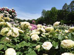 初夏の「神代植物公園」 Vol4 絶景のバラ!バラ!バラ!ばら園♪