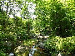 初夏の「国営昭和記念公園」♪ Vol4 「日本庭園」 新緑の美しい風景の中 優雅なお茶♪
