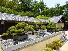 初夏の「国営昭和記念公園」♪ Vol5 「日本庭園」 新緑の美しい盆栽♪
