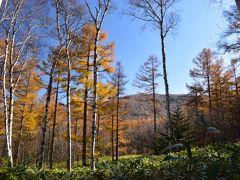 八千穂高原 白駒の池 紅葉