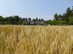 初夏の「国営昭和記念公園」♪ Vol9 懐かしい風景「こもれびの里」 黄金の麦畑♪