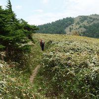 若葉の頃 南沢山から横川山に登る♪ 松平5月の花