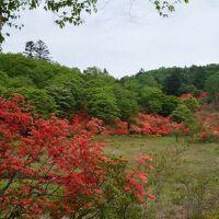 前日光 横根高原 ヤマツツジに彩られた湿原は栃木の小尾瀬。なかなかの穴場だった。