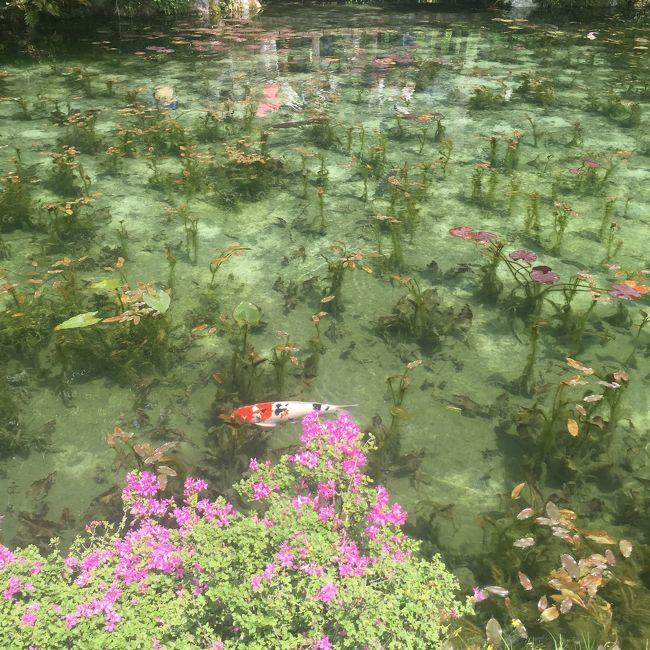 岐阜のモネの池を観に行ってきました。京都から岐阜まではJRで、岐阜駅からはバスで1時間半乗りその後、地元の無料バスで10分更に山奥へ、時間はかかりましたが透明度の高く綺麗なモネの池に感動しました。<br />
