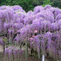 春の栃木旅行(1)伊賀焼作品展と足利フラワーパーク
