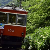 箱根登山電車に乗って、箱根の紫陽花を見に訪れてみた(まだちょっと早かった?編)
