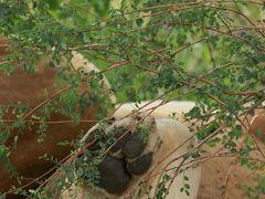 二度目のサファリは憧れのタンザニアへ3ライオンてんこ盛り