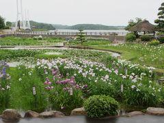 2016年6月 山口・宇部市 ときわ公園 その1 菖蒲苑のしょうぶまつり