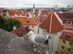 2016 バルト3国&ポーランド旅行記1:カモメが翔ぶ街タリン&SAKUビールで乾杯