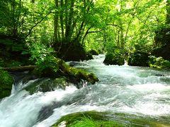やわらかな新緑に癒される~っ ◇ 清々しい~!初夏の奥入瀬渓流ウォーキング♪