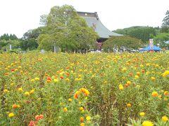 千葉県長南町で紅花とアジサイを見る。