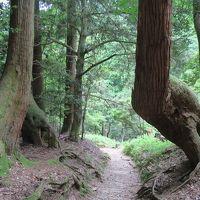 ついうっかり歩いてしまった新緑の鞍馬寺から貴船神社の山道
