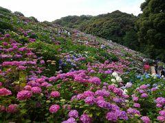 2016年形原温泉の紫陽花祭り