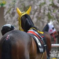 桜花賞観戦と大阪造幣局桜の通り抜け 2014