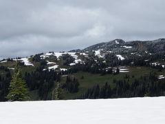 6月のハイキング  マンニングパーク雪解け直後のお花畑