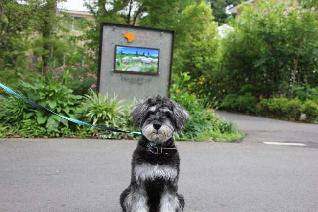 小谷流(こやる)の里 ドギーズアイランド<br />ホテル、ドッグラン、レストラン・カフェ、散策路フォレストウォーク、ドッグプール等があり、ショップでは愛犬と入店できます。ソフトオープン記念を利用して宿泊してきた報告です。
