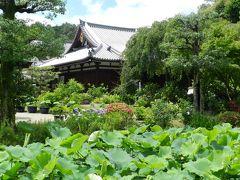 2015年6月◆『法金剛院』の初夏の花たち~カフェ『ぴちぴち金魚』でランチ