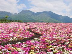 熊本−くじゅう花公園・黒川−
