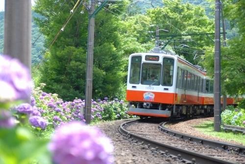 大好きな紫陽花を見に、この季節、紫陽花が沿線に咲くことから「あじさい電車」と呼ばれる箱根登山電車に乗ってきました!