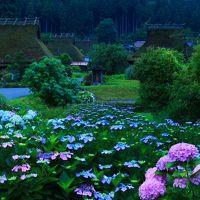 京都 紫陽花めぐり〜美山かやぶきの里、丹州觀音寺、舞鶴自然文化園