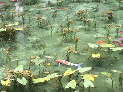 2016年6月 関市板取・モネの池と鮎