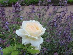 薔薇の季節!ヨーテボリ園芸協会公園にて。