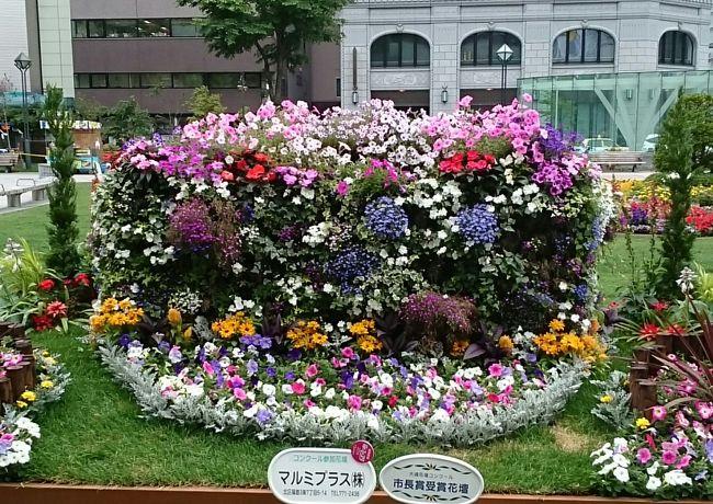 「花フェスタ 2016」で花壇めぐり