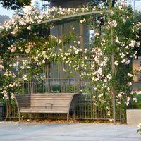 5月下旬 中之島公園のバラ園&ランチ&カフェ 友人と素敵な午後を過ごす