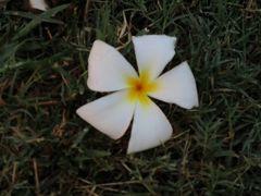 ホノルルで見かけた花鳥風木昆虫