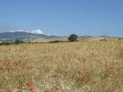 夏の優雅な南イタリア周遊旅行♪ Vol45(第4日) ☆Pietramontecorvino→Volturino:夢のような素晴らしい原風景「イタリアの黄金色の麦畑」の中を走る♪