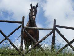 夏の優雅な南イタリア周遊旅行♪ Vol54(第4日) ☆Roseto Valfortore→Troia:挨拶する馬♪緑豊かな森林公園♪