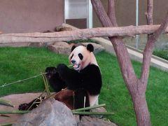 南紀白浜アドベンチャーワールドへ行ってきました!双子のパンダの可愛らしさにノックアウト!!