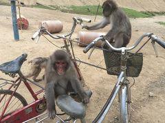 【千葉:高宕山自然動物園】 餌付けができるサル園、さらに野猿とも戯れられる♪