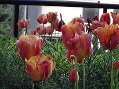 花ざかりのバンクーバー&ビクトリアへ その⑥バンデューセン植物園(バンクーバー)・帰国