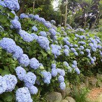 2016年7月 潮来のあじさいの杜二本松寺と水郷佐原水生植物園へ(その1)