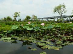 2016年7月 潮来のあじさいの杜二本松寺と水郷佐原水生植物園へ(その2)
