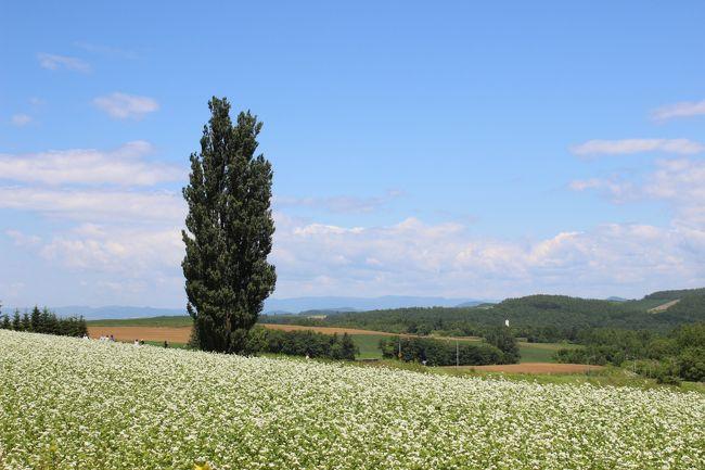美瑛、富良野今が一番美しいお花の季節になりました。<br /><br /><br /><br />美瑛、富良野のお花畑をめぐる旅、ぜるぶの丘をあとにして、<br /><br />続いては『ケンとメリーの木』<br /><br />とその近くの『北西の丘展望公園』に向かいます。<br />